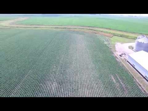 Soybean Plot