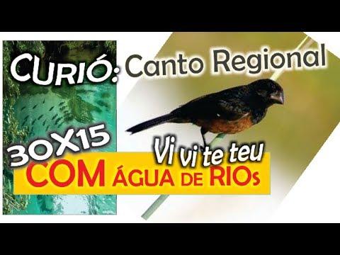 #48 Canto Regional Do Curió Vi Vi Te  Teu Com 30 Minutos De Canto E 15 Minutos De Som De água De Rio