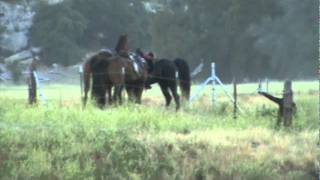 stallions mpg descanso endurance ride 6 18 11 aerc