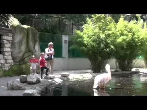 Zoo St Jean Cap Ferrat 22 04 09.wmv