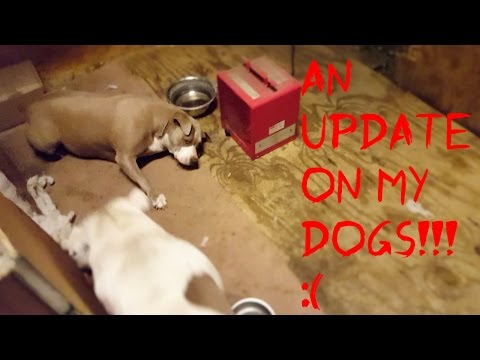 Update On Nala & Yogi's Situation!!!