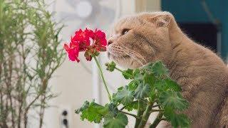 고양이들과 화분갈이를 했어요. 너무 귀여워요