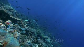 Sunlight On Top Of Reef With School Of Fish