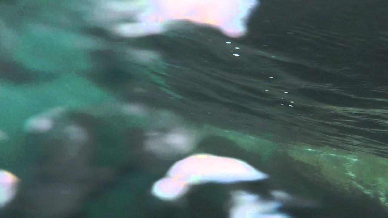 Near Alpha Sea Lion Attack - YouTube