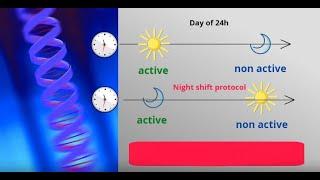 Genes & night shift work (by Laura Kervezee)