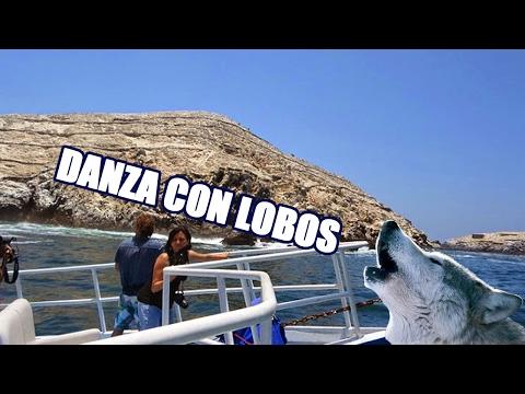 Tour Islas Palomino, Callao - Perú