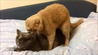 Кот не в ту дырку