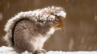 Чем питаются белки в природе зимой?