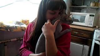 Кот рвёт хозяйку в клочья