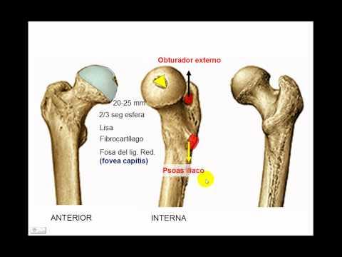 Osteología de miembro inferior 4