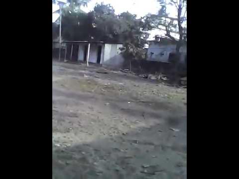 Tiger attack in Raiganj