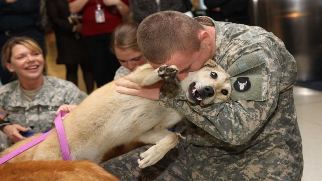 Perros muy felices al ver a sus due os youtube - Animales con personas apareandose ...