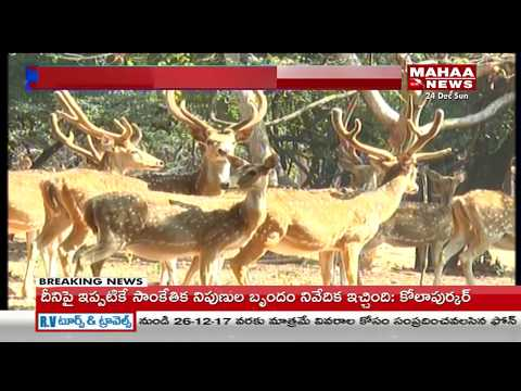 Forest Department Special Focus on Urban Parks Development in Telangana By Government | Mahaa News