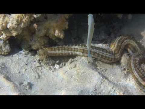 Promenade sous-marine dans le lagon de Moorea - Papetoai - Polynésie française