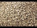 Green Coffee Beans - Fairtrade Organic Coffee From Planet Bean