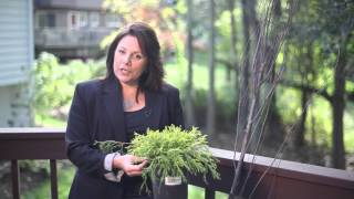 Decorating Outdoor Planters : Beautiful Garden Landscaping