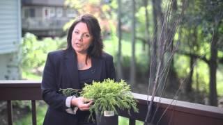 Decorating Outdoor Planters : Beautiful Garden Landscaping