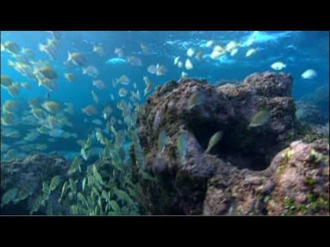 Jean-Michel Cousteau: Ocean Adventures - Voyage to Kure
