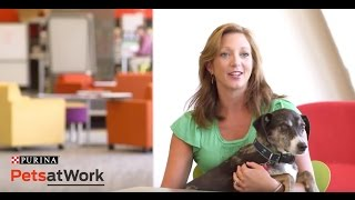 Purina Pets at Work - How Office Dogs and Cats Brighten up the Day thumbnail