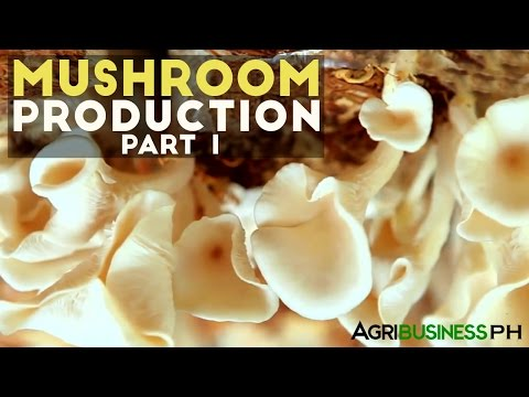 Mushroom production in the Philippines | Mushroom production Part 1 #Agribusiness