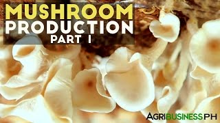 Mushroom production in the Philippines - Agribusiness Season 3 Episode 10 Body 1