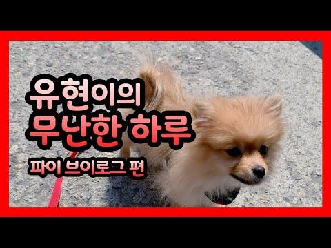 [Dreamcatcher's VLOG] 유현이의 무난한 하루 : 파이 브이로그 편