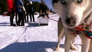 видео Туры на собаках в Карелии