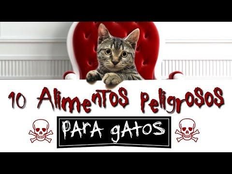 10 alimentos peligrosos para gatos youtube - Alimento para gatos esterilizados ...