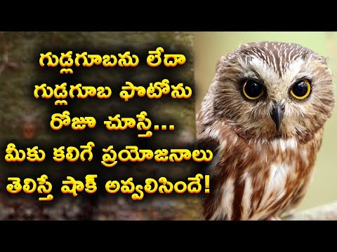 mysterious-facts-about-owls-in-telugu-||-if-you-staring-owls-eyes-daily-for-sometime-gain-knowledge