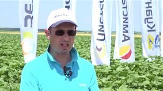 Иновации в слънчоглед от Синджента