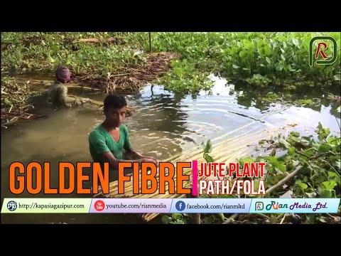 Golden Fibre | Jute Plant | Path or Fola || Bangladesh