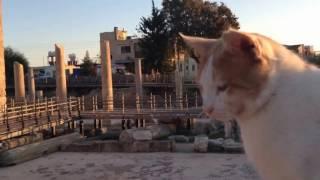 Кипр (Пафос 2015 Ноябрь)(Этот ролик обработан в Видеоредакторе YouTube (http://www.youtube.com/editor), 2016-07-02T13:42:06.000Z)