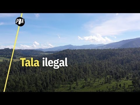 Él defiende el bosque de la tala ilegal en el Estado de México