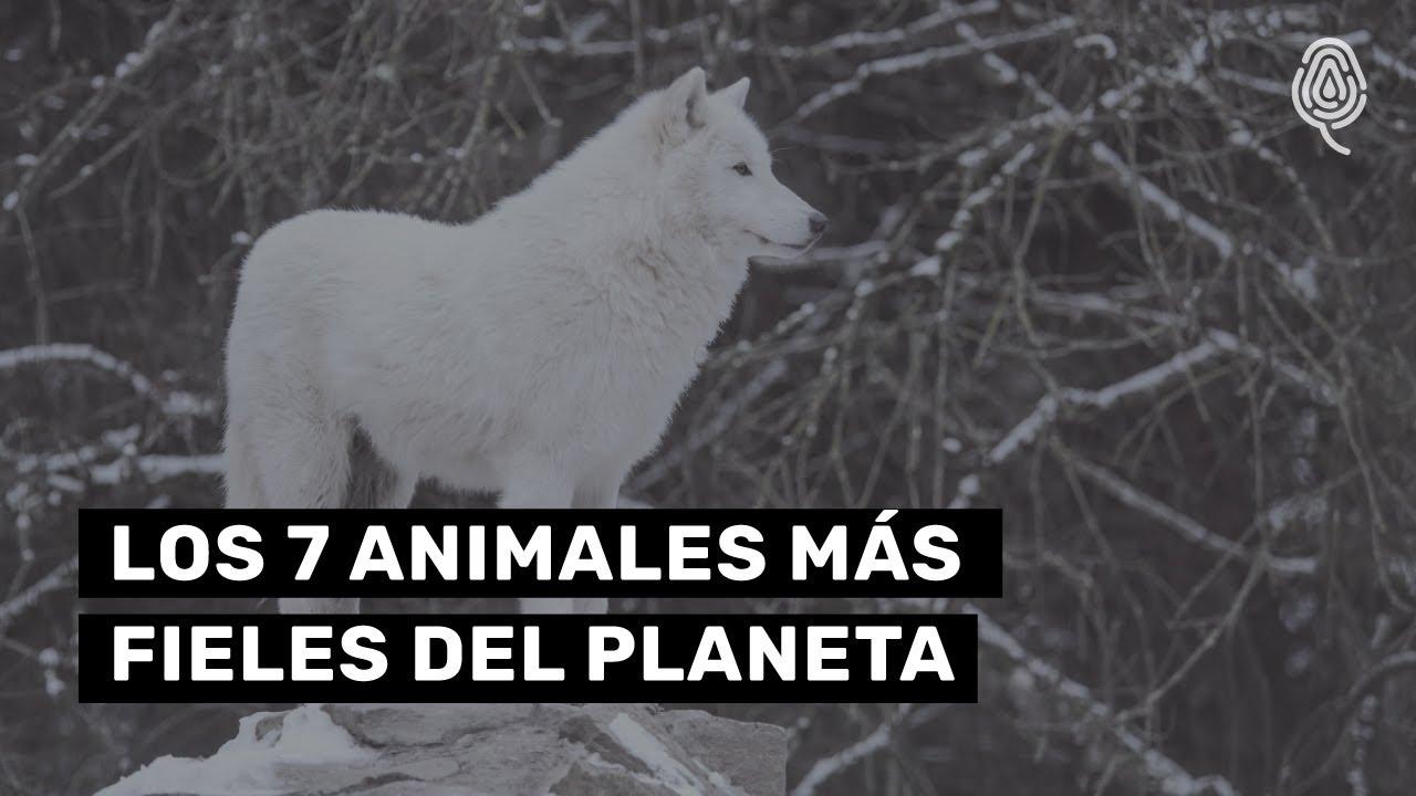 Los animales más fieles del planeta