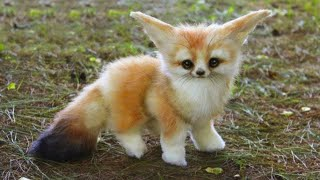 15 Cutest Baby Animals You Need To Pet