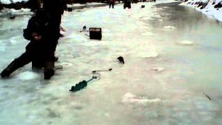 Норка ловит рыбу/ Mink fishing