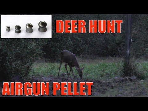 Deer Hunting With A Pellet Gun