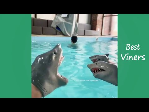 Shark Puppet Funny Instagram Videos - NEW Shark Puppet Vines - Best Viners 2020