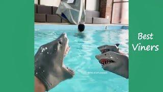Shark Puppet Funny Instagram Videos - NEW Shark Puppet Vines - Best Viners 2020