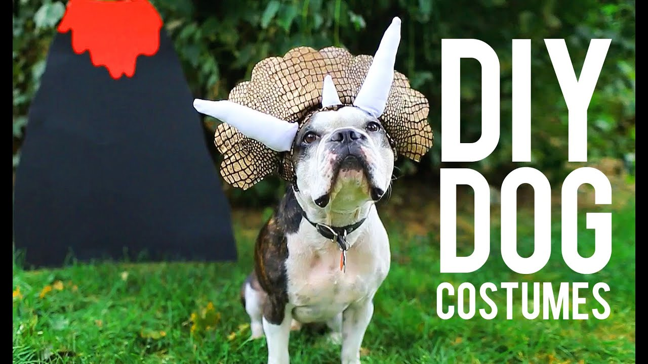 Diy costumes for your pet youtube solutioingenieria Choice Image