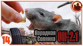 Поймал крысу мутанта. Народная Солянка + Объединенный Пак 2.1 / НС+ОП 2.1 # 014.