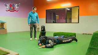 Bodyguard Dog Training Course at Royal Dog Academy