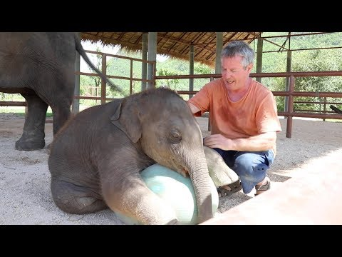 Playing Ball with Baby Elephant