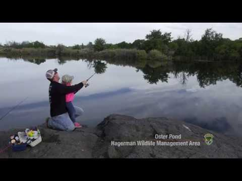Fish Stories From Hagerman Wildlife Management Area