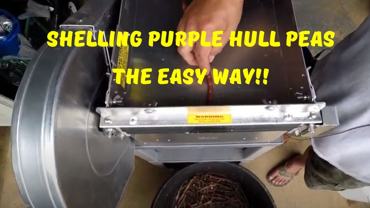 Shelling Purple Hull Peas The Easy Way // Pea Shelling Demonstration!!