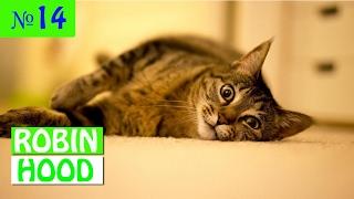 ПРИКОЛЫ 2017 с животными. Смешные Коты, Собаки, Попугаи // Funny Dogs Cats Compilation. Февраль №14