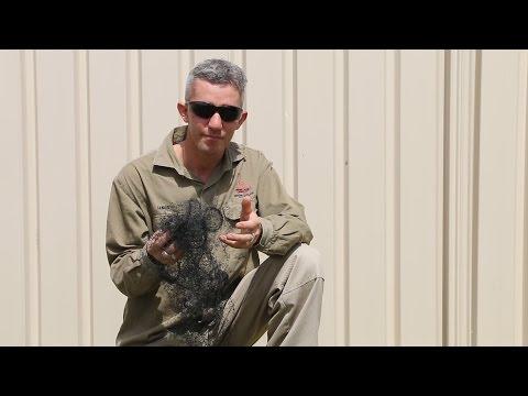 Brown Snake Caught In Bird Netting - Ep. 4 [Featuring Ian Renton]