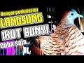 Perkutut Lokal Gacor Di Pagi Hari Pling Jago Mancing Bunyi  Mp3 - Mp4 Download