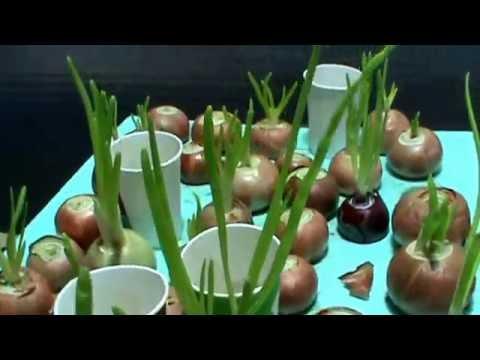 How To Setup Indoor Organic Aeroponics Anion Youtube
