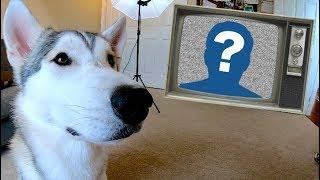 My Husky's Top 10 Favorite Youtube Channels!